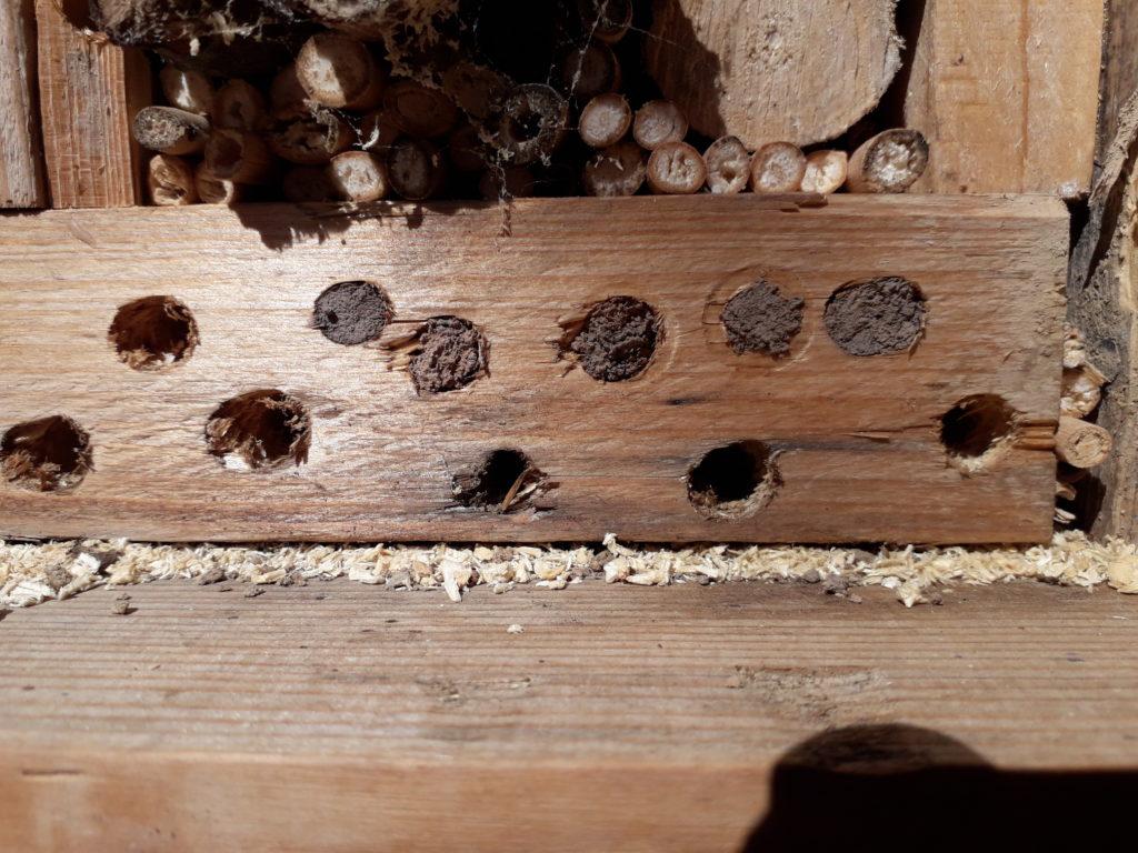 Wildbienen füllen Löcher im hotel